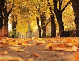 Préparer l'arrivée de l'automne
