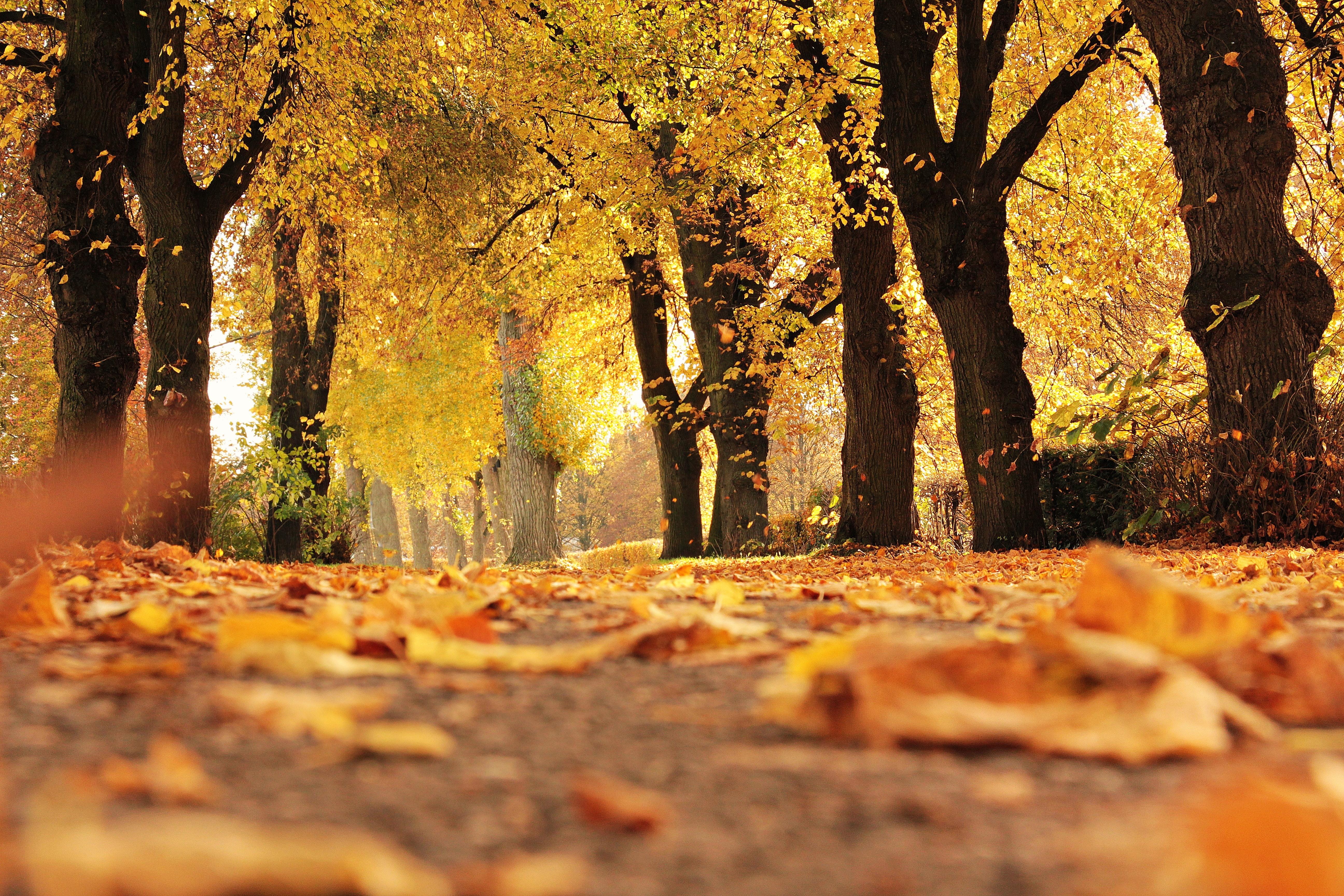 lightstyleblog automne
